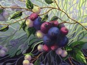 Wild Blueberries 5 by  Joane Moran - AFCA