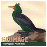 Photo by Plumage: The Majestic Art of Birds