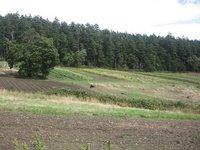Upper Fields Border Mt. Doug Park