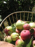 The Old House Orchard