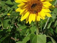 Cover Crops Enhance bird and Bee Habitat