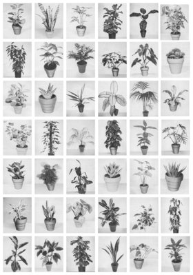 Sergio Rojas Chaves : At Home WIth Plants - Oct 17th @ Odeon Alley Window