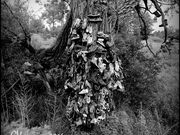 The Shoe Tree Clarmont Ontario by  Gregory Varano