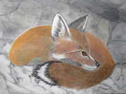 Red Fox Cave by  Donna Birtwistle