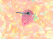 AnnaMale Hummer by  Donna Birtwistle