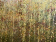 Birch and Maple Forest by  Katharine Geddes