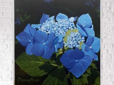 Delicate Blue Lace Cap Hydrangeas by  Donna Rose Law