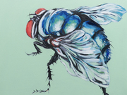 Bluebottle Fly by  Laura Bonnie