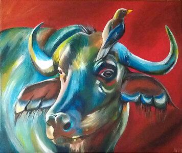 Cow by  Nicole Majcher