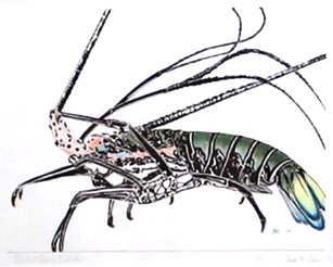 Painted Spiny Lobster by  Olivia M. Lake