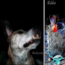 Profile Image: Rabbit