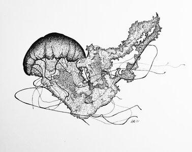 Jellyfish - Original Pen and Ink Artwork by  Adam Bartosik