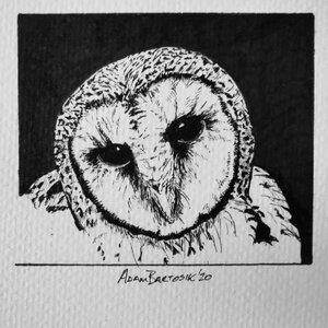 Owl - Original Pen and Ink Artwork by  Adam Bartosik