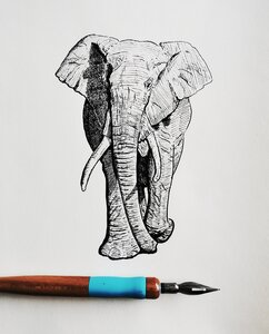 Elephant - Original Pen and Ink Artwork by  Adam Bartosik