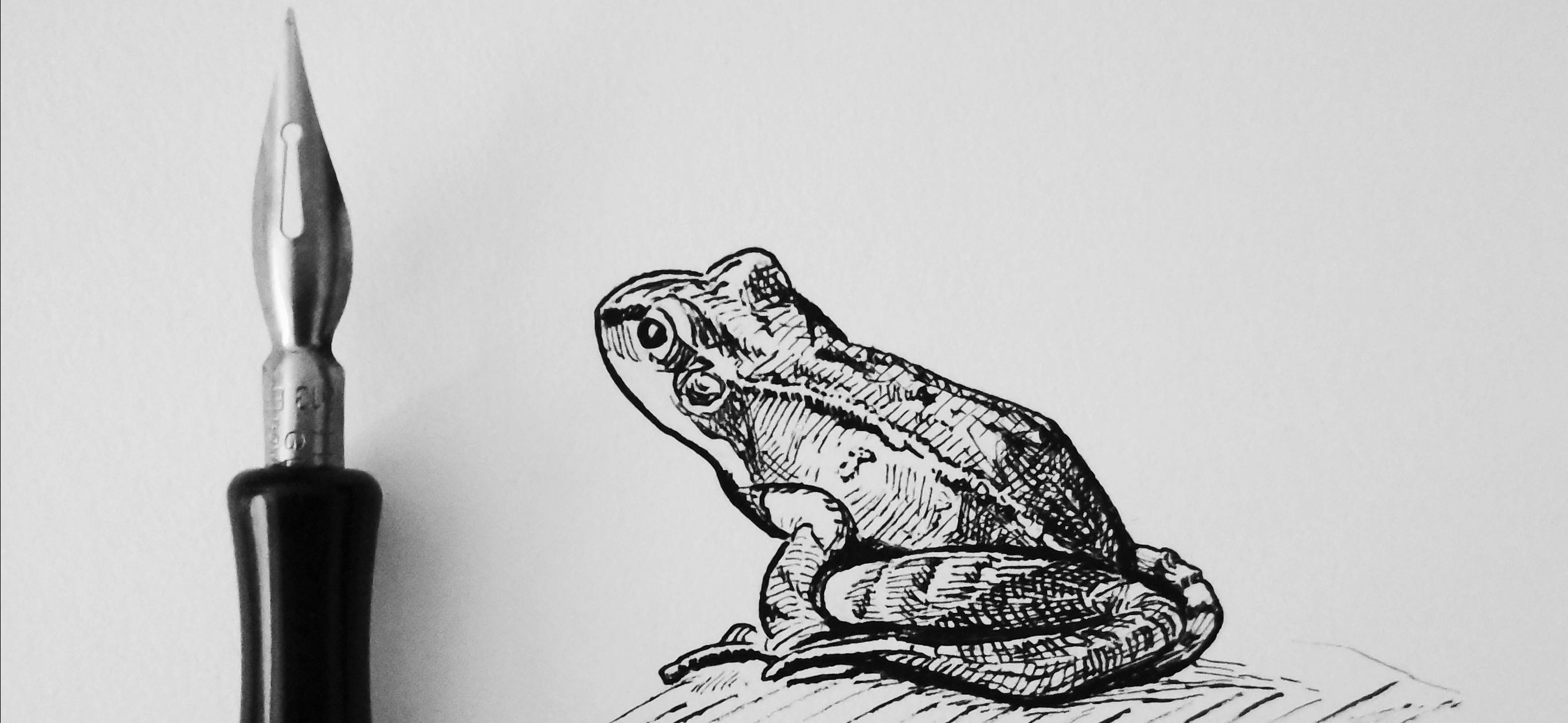 Frog - Original Pen and Ink Artwork by  Adam Bartosik