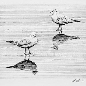Beach Birds - Original Pen and Ink Artwork by  Adam Bartosik