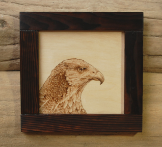 Peregrine Falcon by  Devin Watson