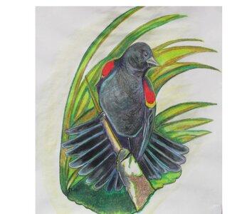 Blackbird by  Debra Thomlinson