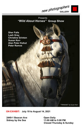 Wild About Horses @ new photographers GALLERY Jul 24 2021 - Sep 24th @ new photographers GALLERY