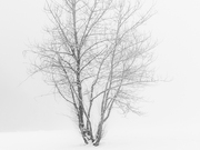 Solitude by  Sean Schuster