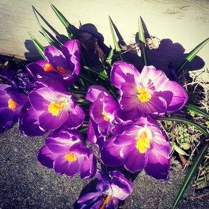 Spring Forth by  Lynda Lombardi