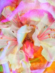 Garden Dreams by  Carol Auld