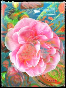 Floral Visions by  Carol Auld