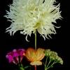 Blackground Floral Design