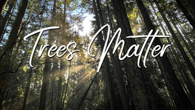 Trees Matter Premiere – A Creative Collaboration @ Online Sep 22 2021 - Oct 22nd @ Online