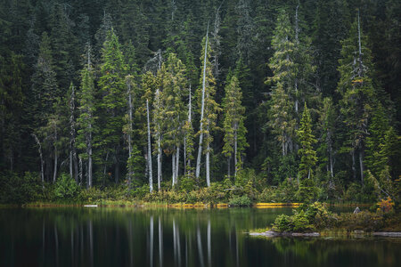 Paradise Meadows Evergreen by  Emily Norton