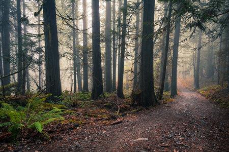 Woodland Trail by  Emily Norton
