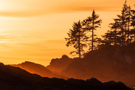 Botanical Beach Sunset Glow by  Emily Norton