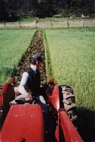 Plowing in Cover Crop